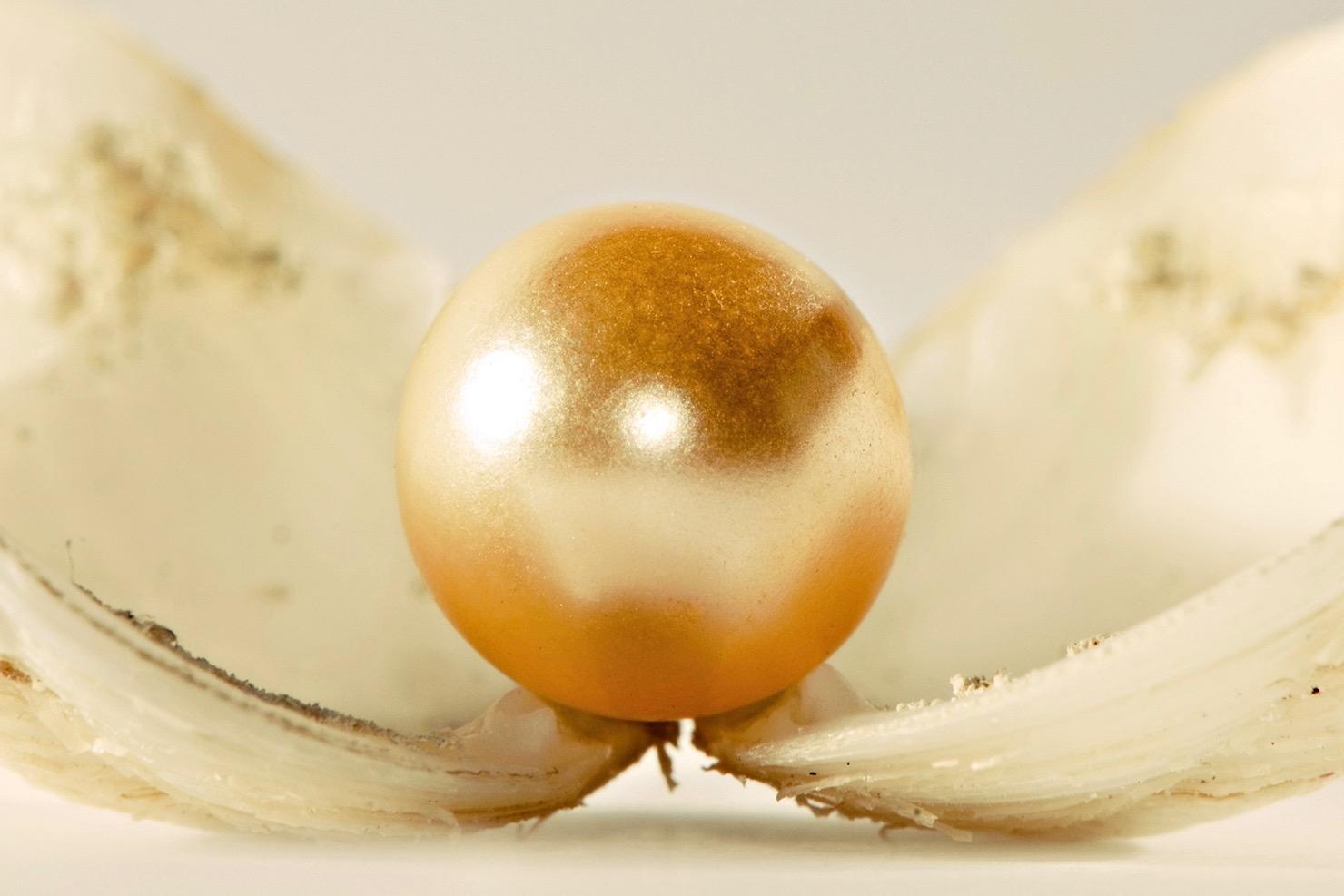 perla (1)