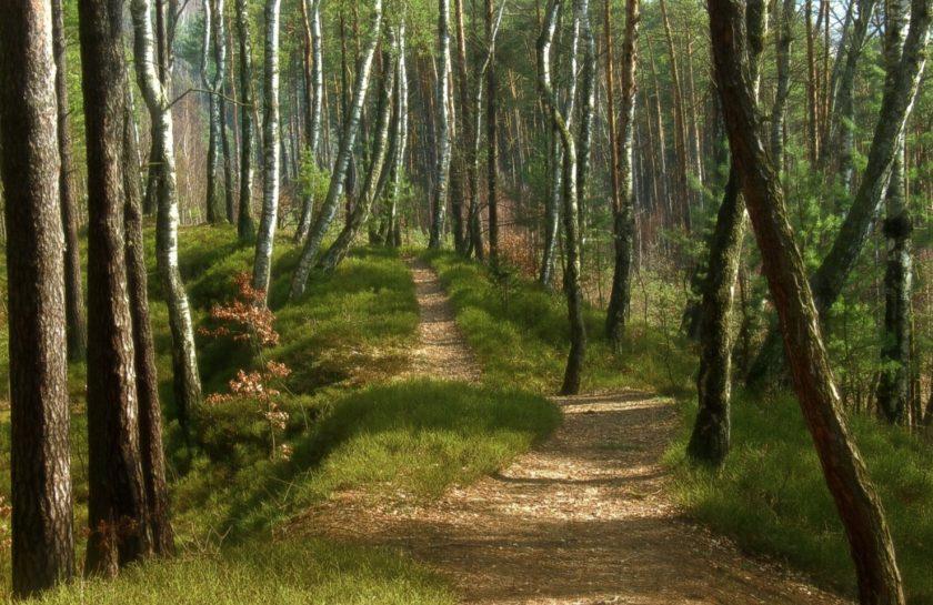 camino arbol