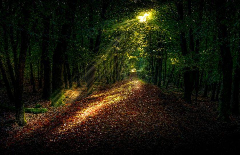 Luz Oscuridad