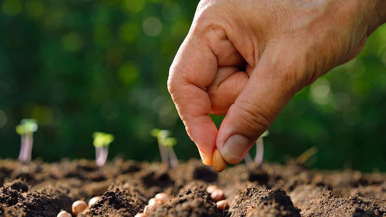 main-sembrar-semillas-en-jardin