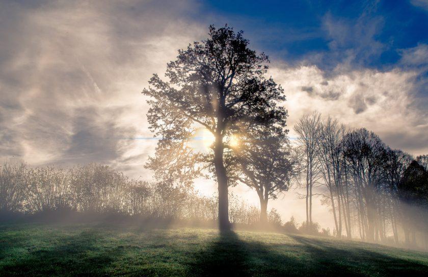 rsz_1fog-sky-nature-tree-atmosphere-woody-plant-1435821-pxherecom