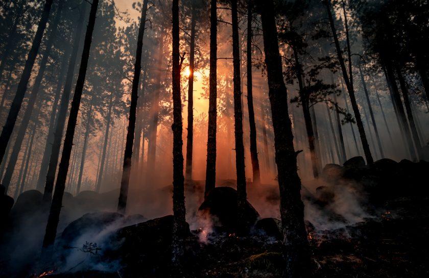 rsz_forest-fire-sun-nature-tree-natural-environment-1576663-pxherecom