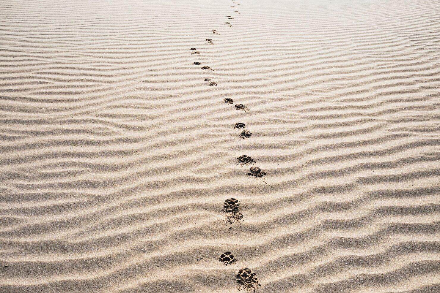 Te seguire