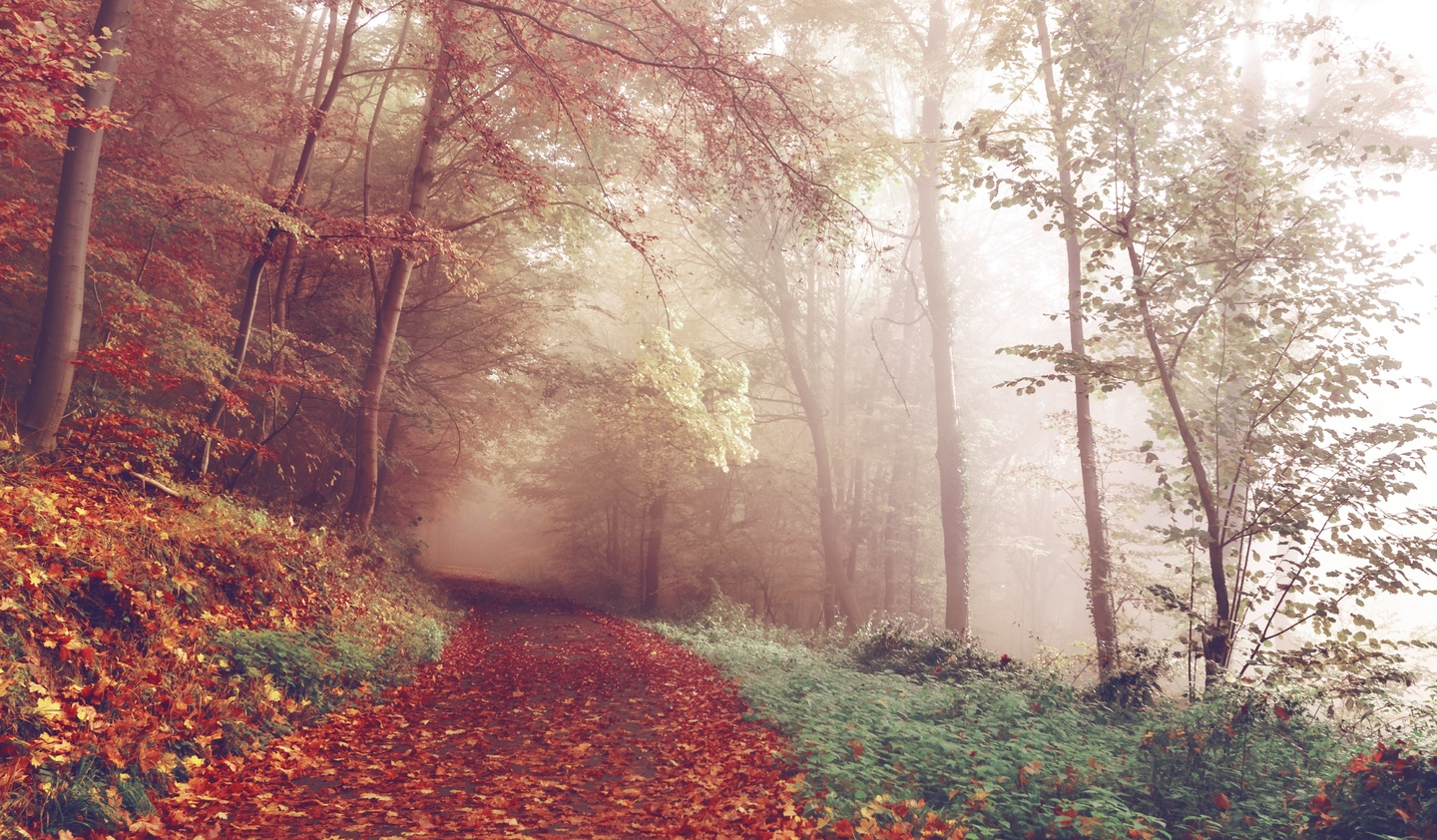 tree-nature-forest-path-plant-mist-21939-pxhere.com
